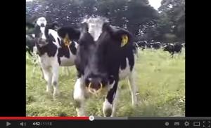 感謝の気持ちしか持てない!牛の一生をきちんと見て!