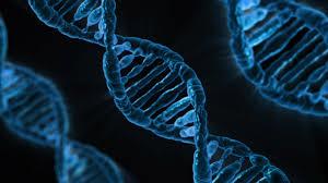 Meaithy ビタミンD 遺伝子