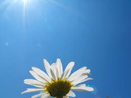 無題  日光浴が寿命を延ばすのはなぜ?